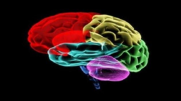 Le sexe du cerveau : au delà des préjugés